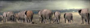 Beautiful image of Elephants provided by the Maue Kay Foundation